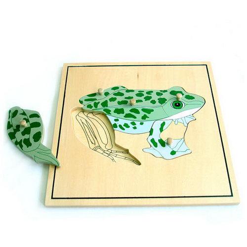 Frog & skeleton Puzzle - Montessori Wooden Frog & Skeleton Puzzle