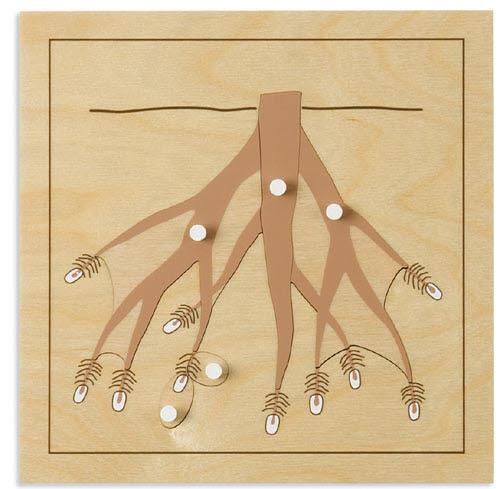Roots Puzzle - Roots Puzzle