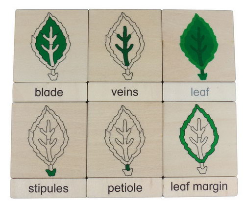 Classification 3 Part Timber Cards - Leaf Parts -