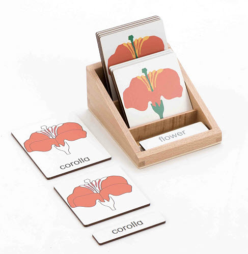 Classification 3 Part Timber Cards - Flower Parts - Classification 3 Part Timber Cards - Flower Parts