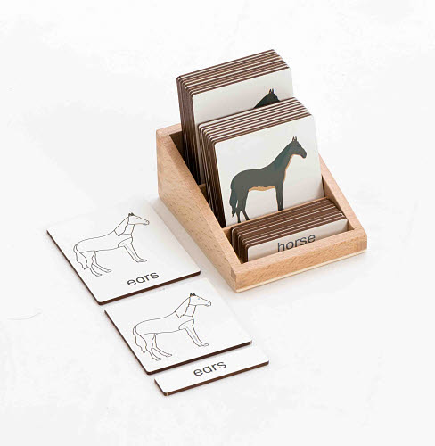 Classification 3 Part Timber Cards with Timber Holder - Horse Parts - Classification 3 Part Timber Cards with Timber Holder - Horse Parts