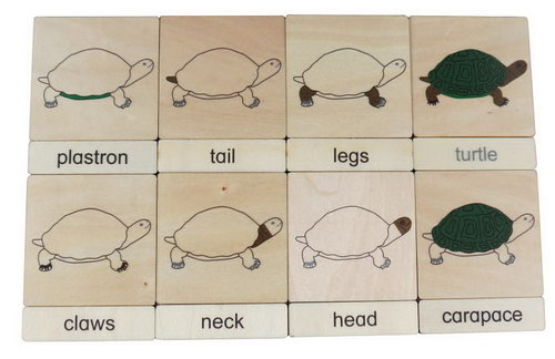Classification 3 Part Timber Cards - Turtle Parts - Classification 3 Part Timber Cards - Turtle Parts