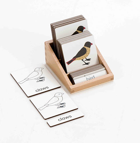 Classification 3 Part Timber Cards - Bird Parts - Classification 3 Part Timber Cards - Bird Parts