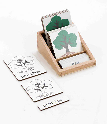 Classification 3 Part Timber Cards - Plant Parts -