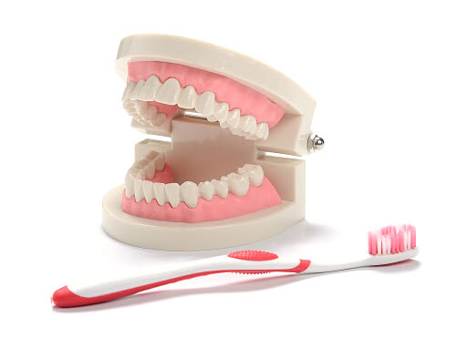 Teeth Cleaning Teaching Model with Tooth Brush Dentist Tooth Cleaning - Teeth Cleaning Teaching Model with Tooth Brush Dentist Tooth Cleaning