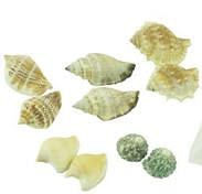 Sea Shells Matching Activity - Sea Shells Matching Activity