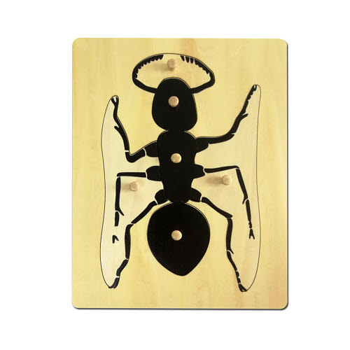 Ant Puzzle - Timber - Ant Puzzle - Timber