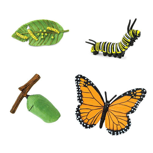 Life Cycle of a Monarch Butterfly Miniatures - Life Cycle of a Monarch Butterfly Miniatures
