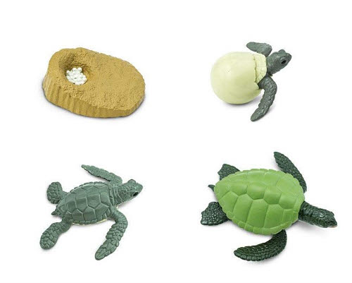 Life Cycle of a Green Sea Turtle Miniatures - Life Cycle of a Green Sea Turtle Miniatures