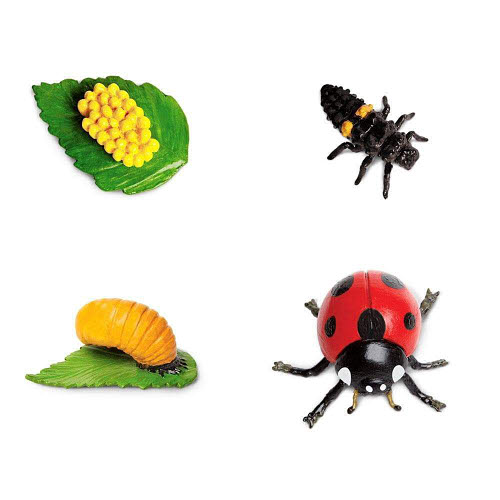 Life Cycle of a Ladybug Miniatures - Life Cycle of a Ladybug Miniatures