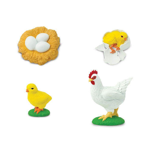 Life Cycle of a Chicken Miniatures - Life Cycle of a Chicken Miniatures