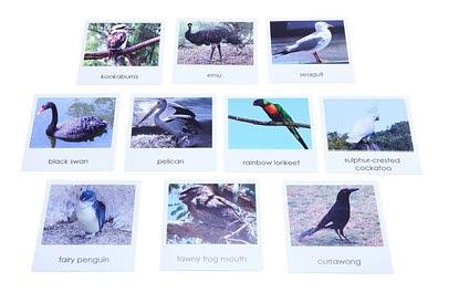 Nomenclature Cards - Australian Birds - Nomenclature Cards - Australian Birds