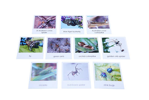 Nomenclature Cards - Australian Insects and Spiders - Nomenclature Cards - Australian Insects and Spiders