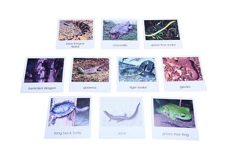 Nomenclature Cards - Australian Reptiles and Amphibians - Nomenclature Cards - Australian Reptiles and Amphibians