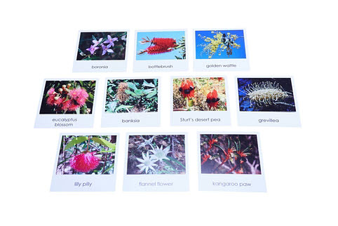 Nomenclature Cards - Australian Wildflowers - Nomenclature Cards - Australian Wildflowers