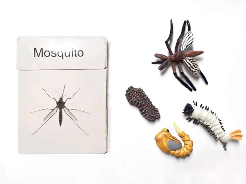 Life Cycle of Mosquitoes Miniatures with Corresponding Cards - Life Cycle of Mosquitoes Miniatures with Corresponding Cards